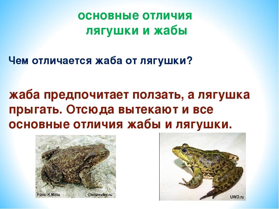 Чем отличается жаба от лягушки