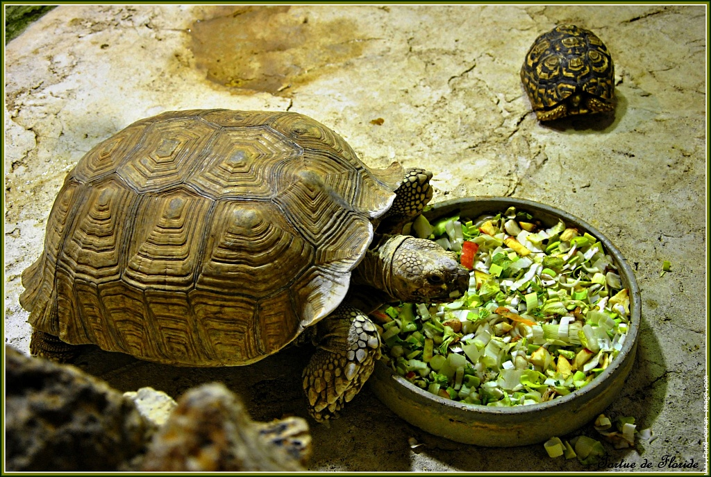 Как ухаживать за черепахой: содержание дома и питание, где правильно поставить домик