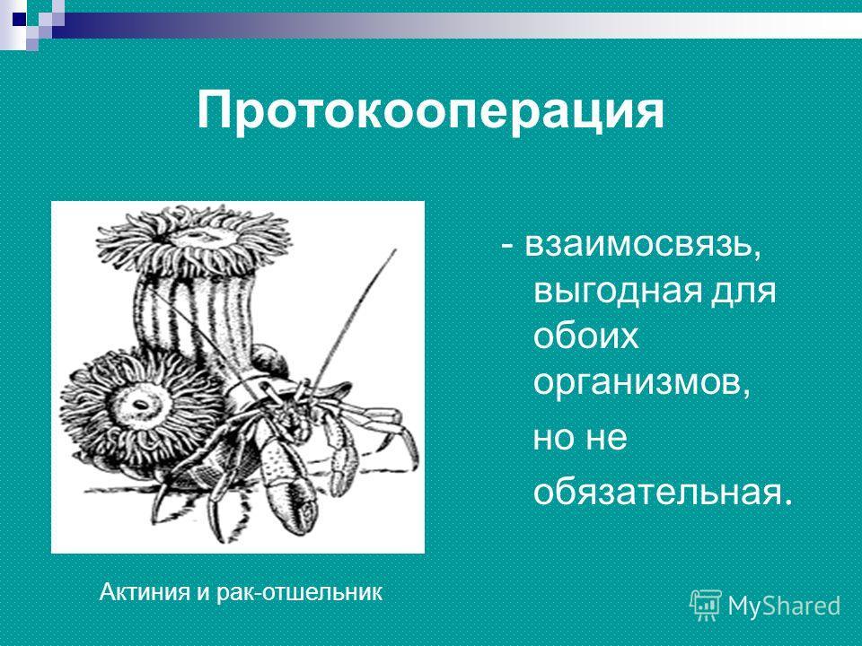 Рак отшельник и актиния