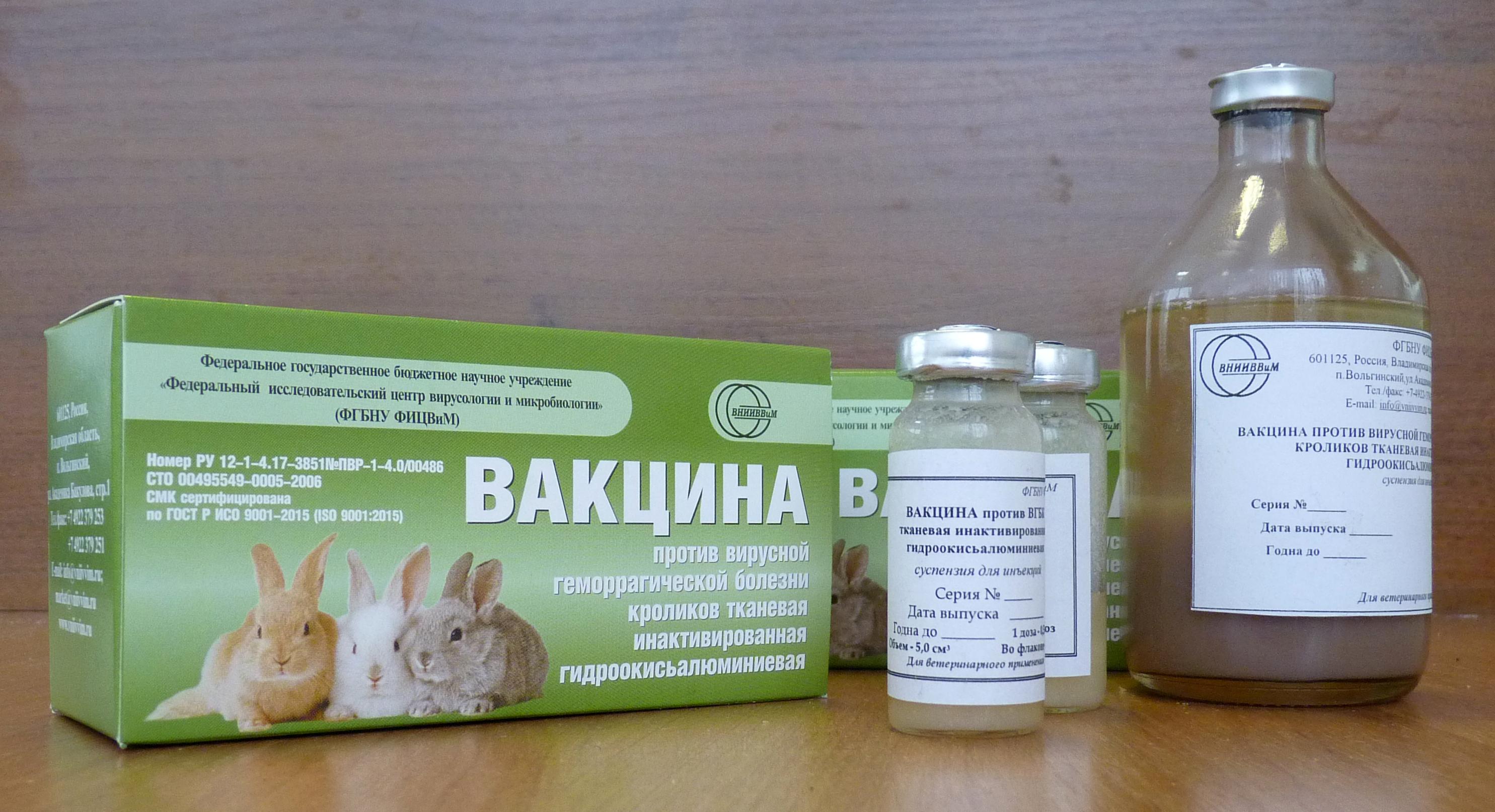 Прививки декоративным кроликам: какие и когда делать