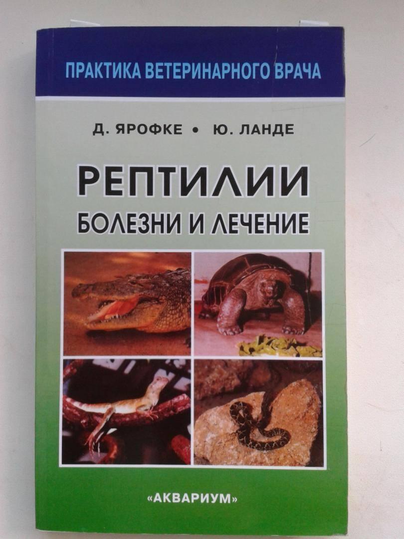 Болезни рептилий.. террариум. устройство и дизайн