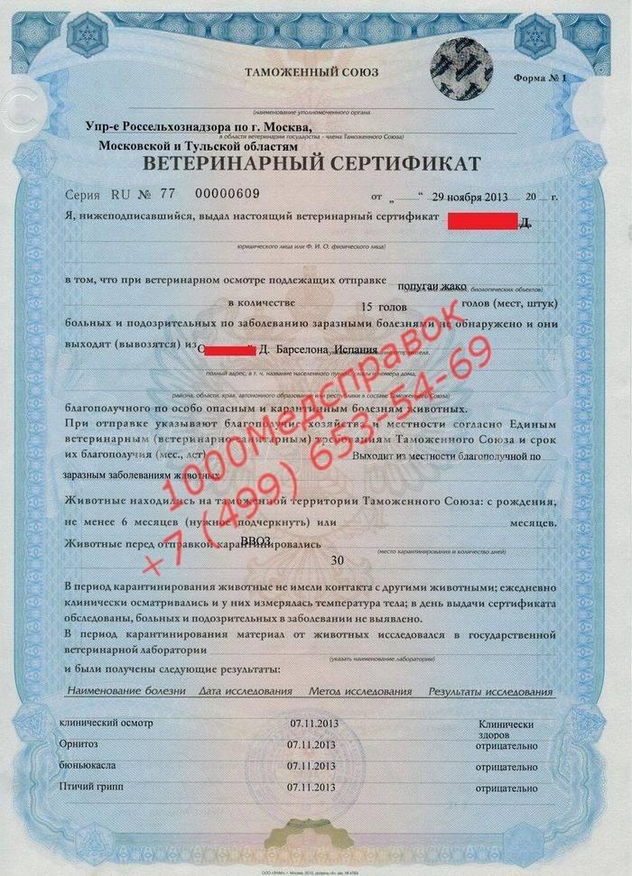 Перевозка собак и кошек без ветеринарных свидетельств по российской федерации - домашние животные